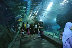 A visit to the aquarium in Siam Paragon